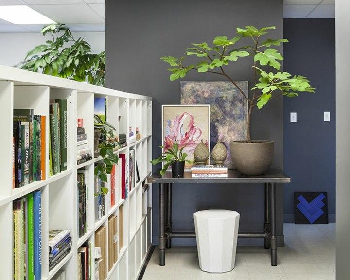 fotos de plantas libreros colores grises