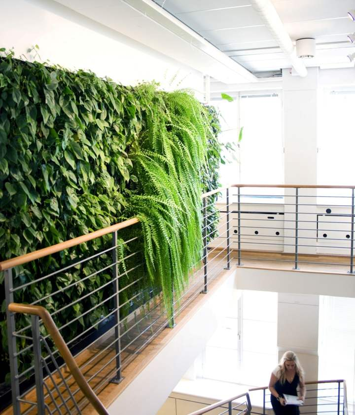 fotos de plantas pared verde vertical
