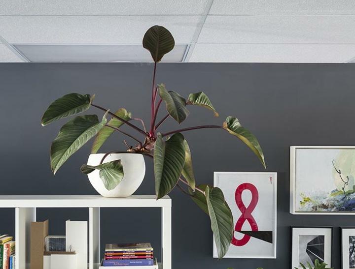 fotos de plantas paredes grises especiales