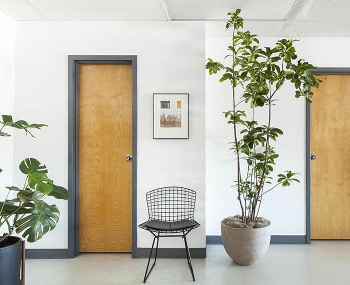 fotos de plantas sillas especiales metales