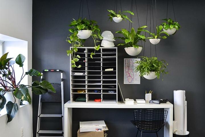fotos de plantas trabajo casas escalera