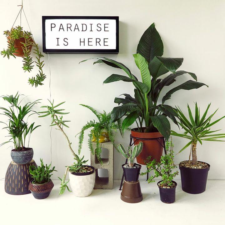 fotos de plantas variadas macetas cuadros