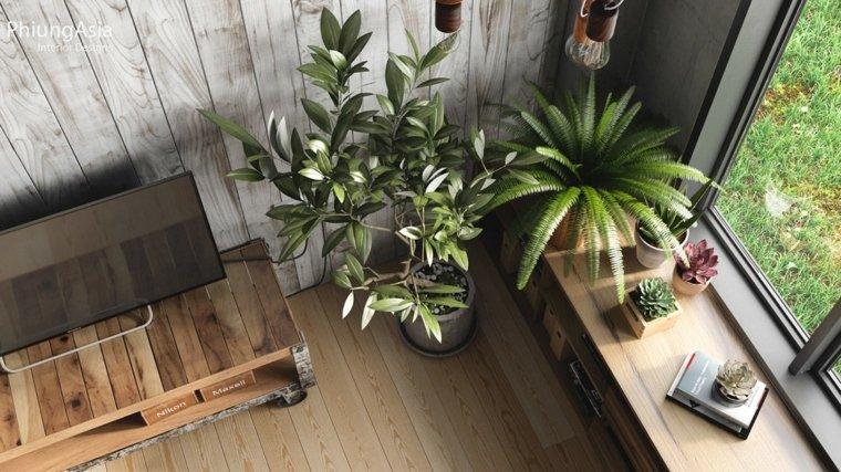 interiorismo asia olivo plantas macetas