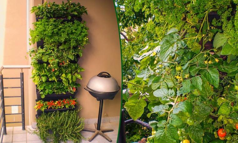 jardin verrtical huerto especias