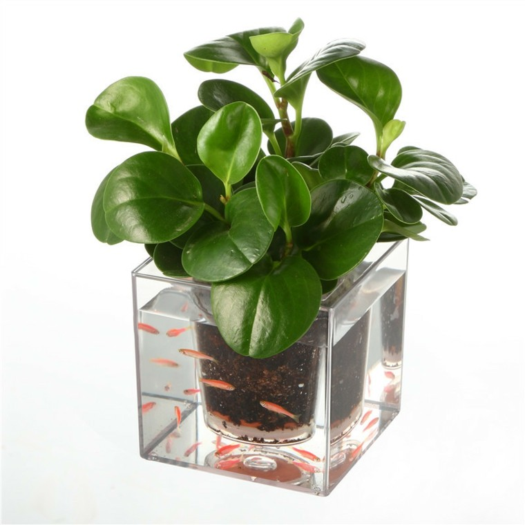 Pflanztopf moreover 586922 also Chinese Hamster also 142285669449074498 also Maceteros Decorativos Para El Interior. on mini orchid care