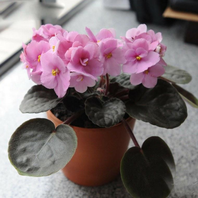 plantas con flores de interior