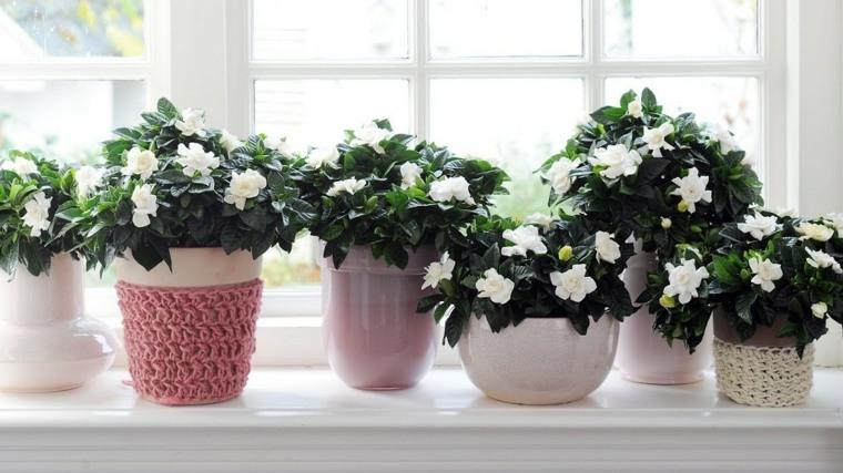 plantas de interior con flor blanca