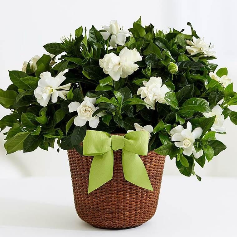 plantas de interior con flor blancas