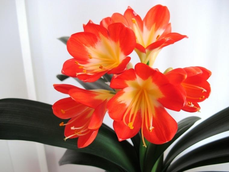 plantas de interior con flor decoración sala de estar