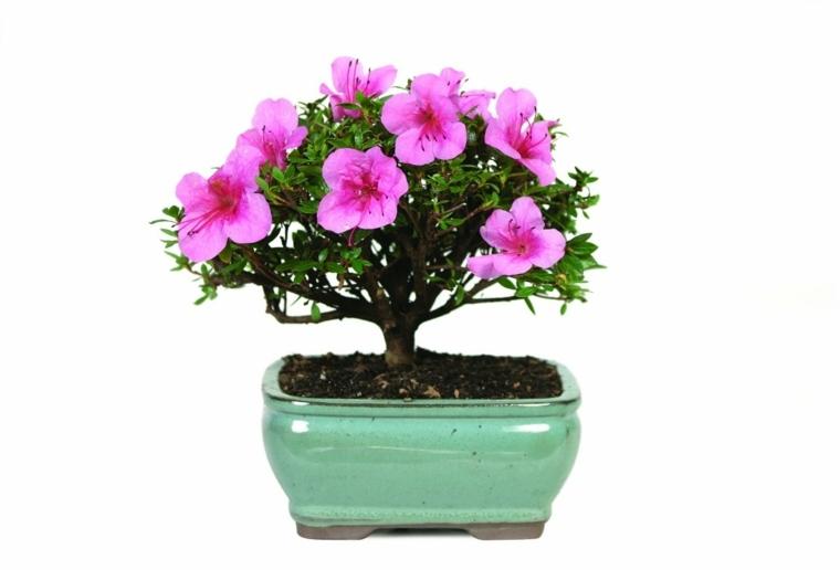 plantas de interior con flor decoración salón