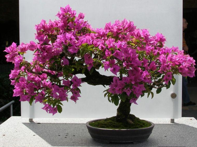 plantas de interior con flor decorar sala de estar