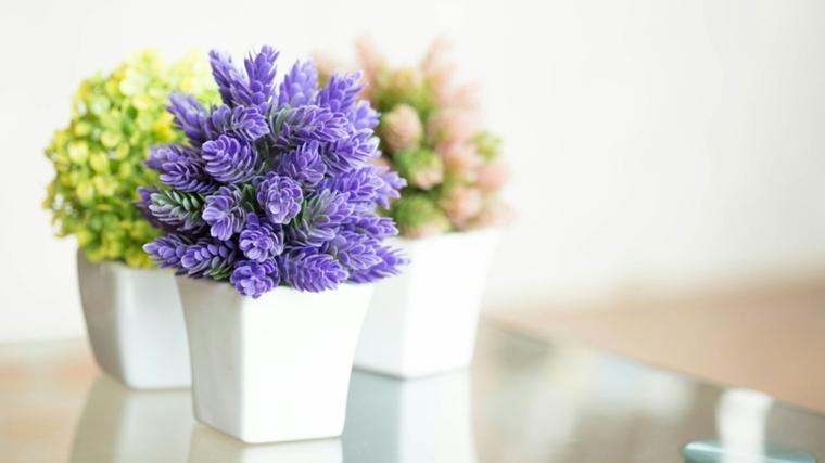 Plantas de interior con flor para decorar -