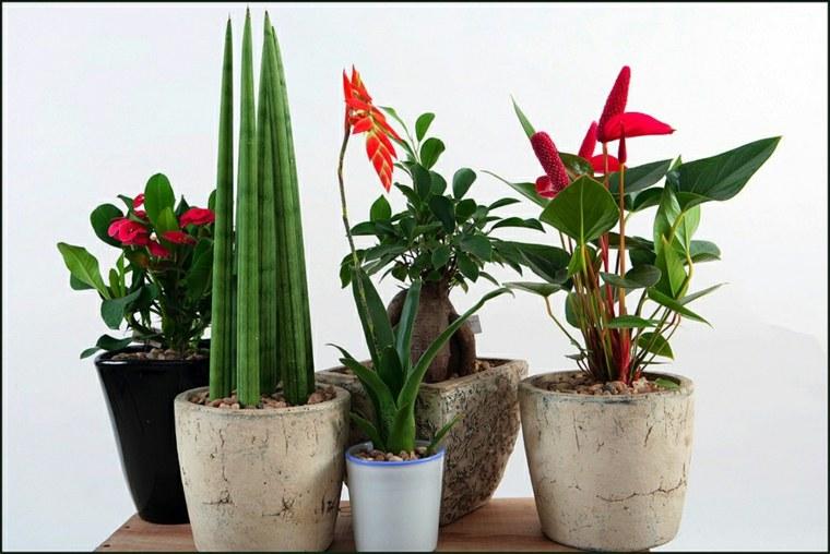 Plantas De Interior Con Flor Para Decorar - Plantas-interior-con-flor