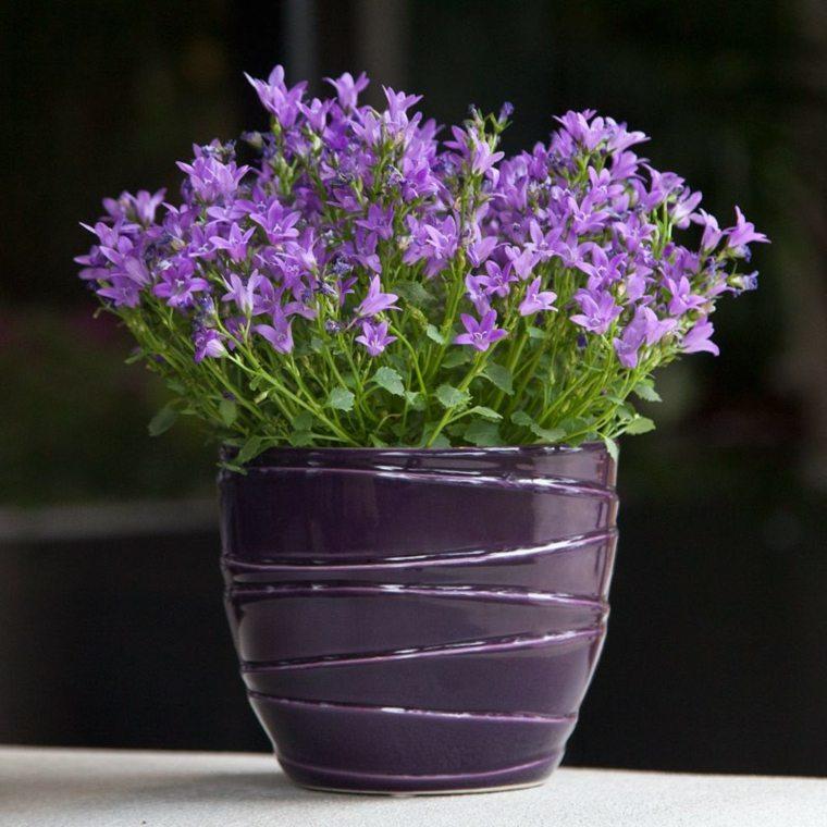 plantas de interior con flor moradas