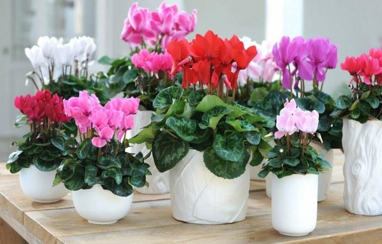 plantas de interior con flor pequeñas