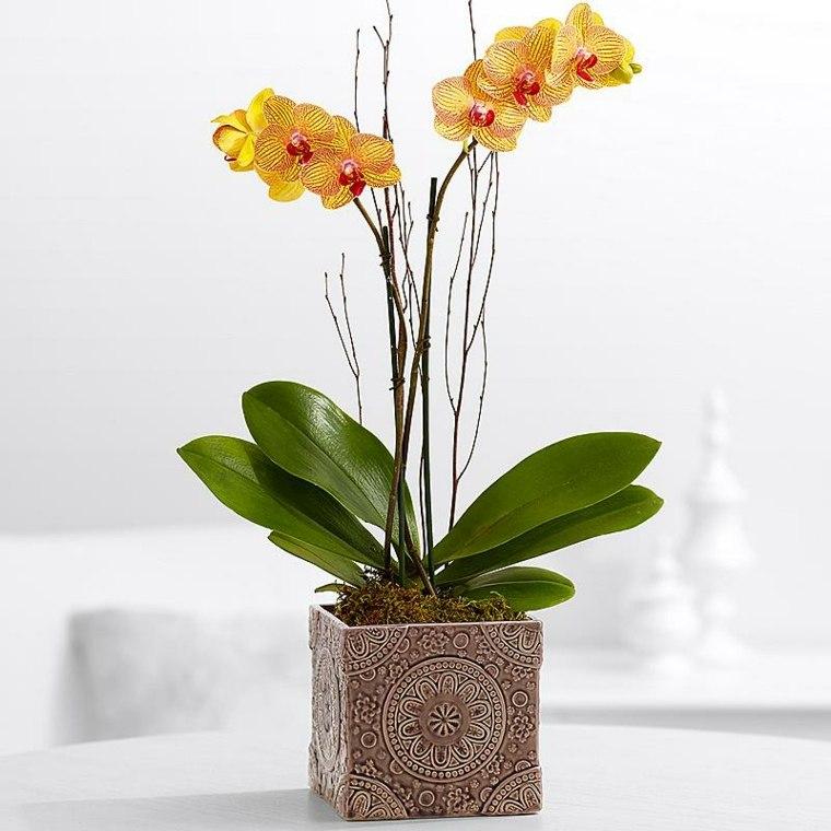 plantas de interior con flor salón
