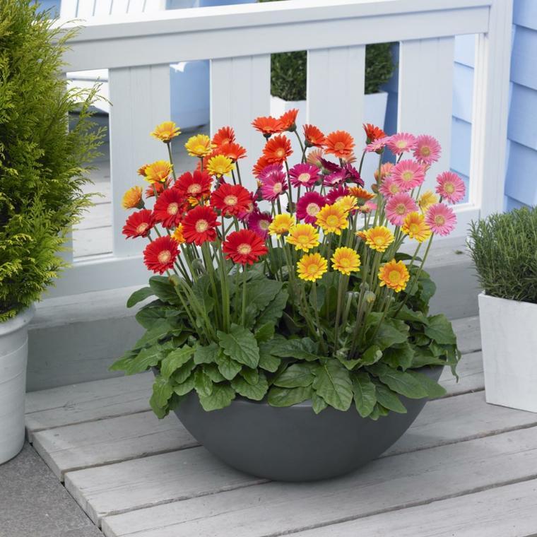 plantas de interior decorar