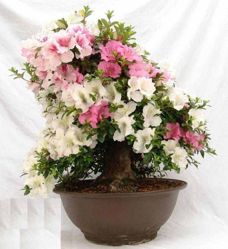 plantas de interior pequeñas