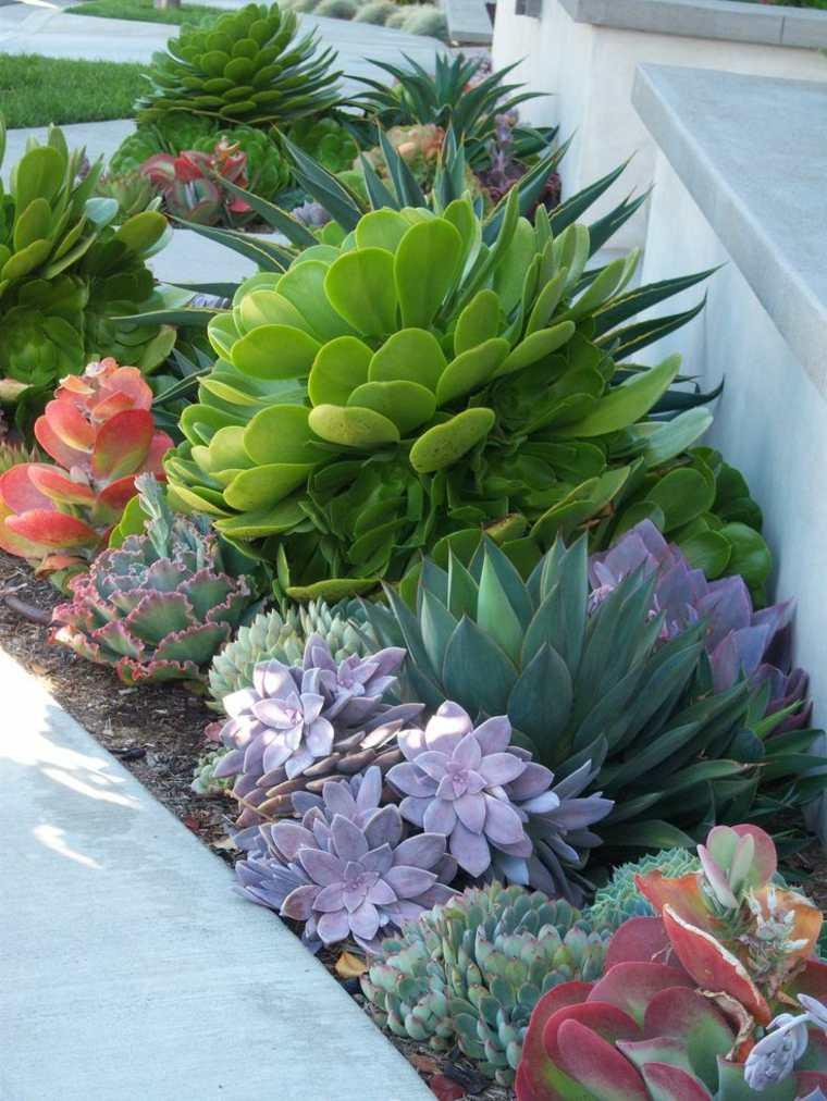 bonita combinación plantas jardin