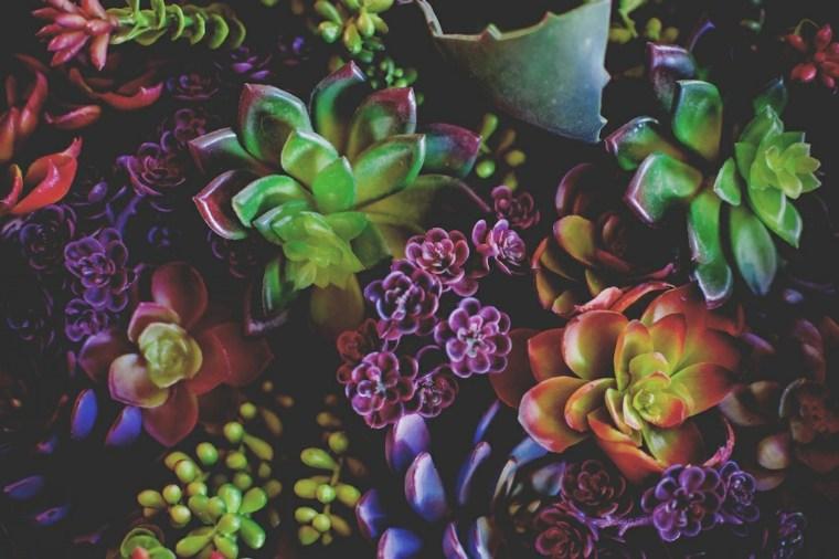 bonitas plantas suculentas selección cerca