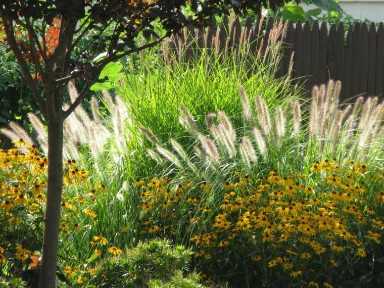 selección de plantas y flores