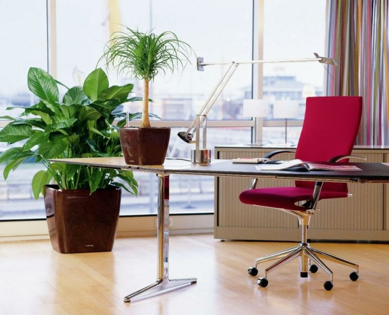 Decoraci n feng shui en la oficina para trabajar mejor for Plantas para interiores feng shui
