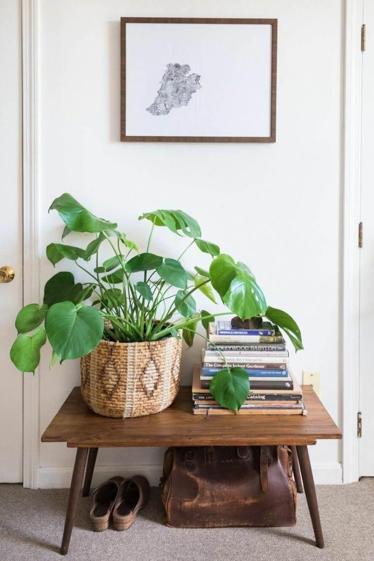 decoración de interiores 2017 plantas hojas grandes ideas