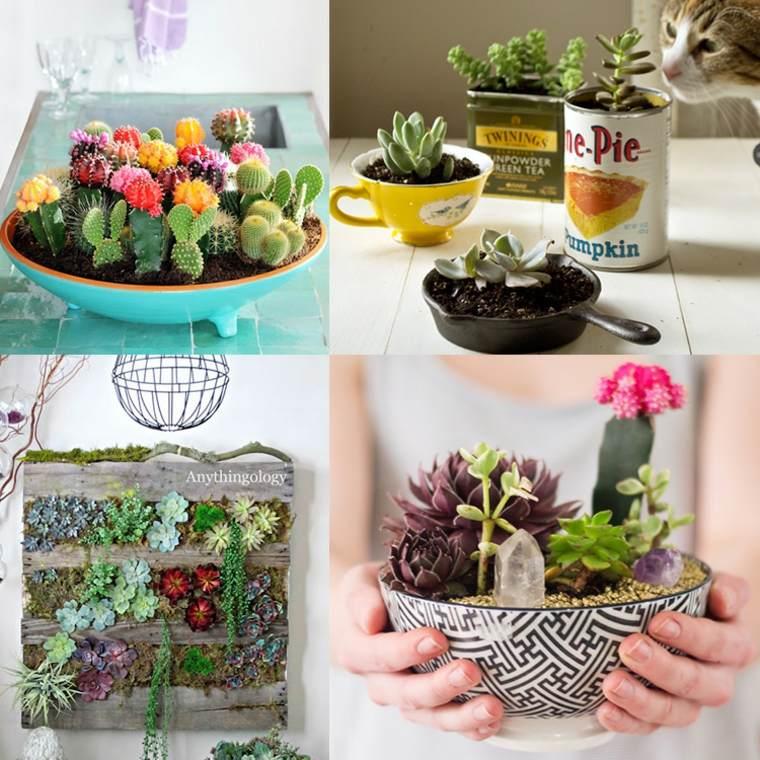 estupendas ideas decorar plantas suculentas
