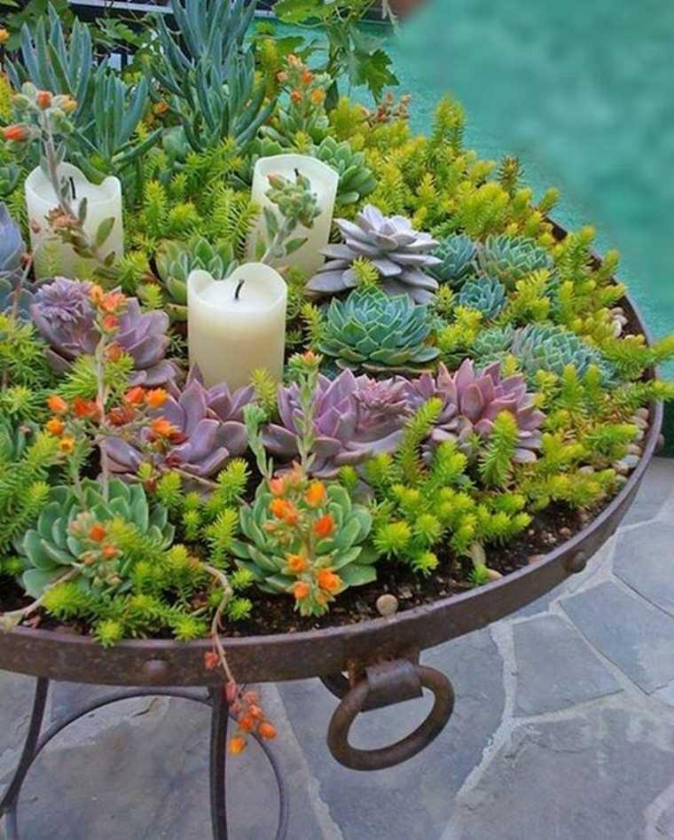 estupendo plato plantas jardfçin suculentas