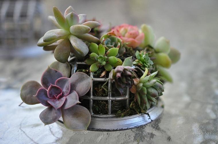 ideas decorativas plantas casa diseno