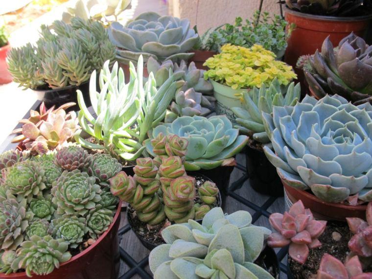 imagen distintas especies plantas