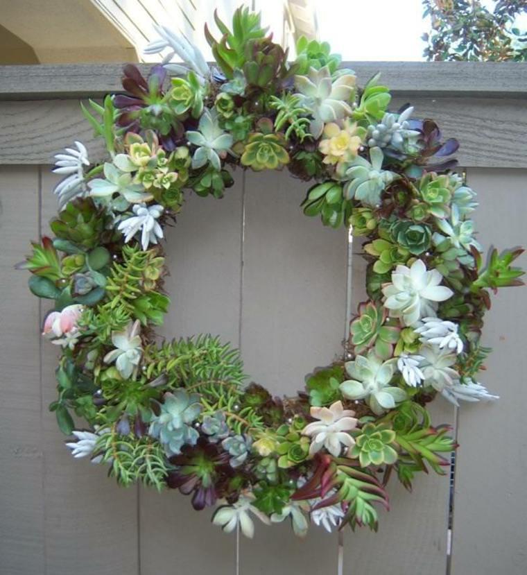 bonita corona plantas suculentas