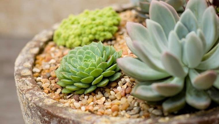 originales ideas decorar plantas