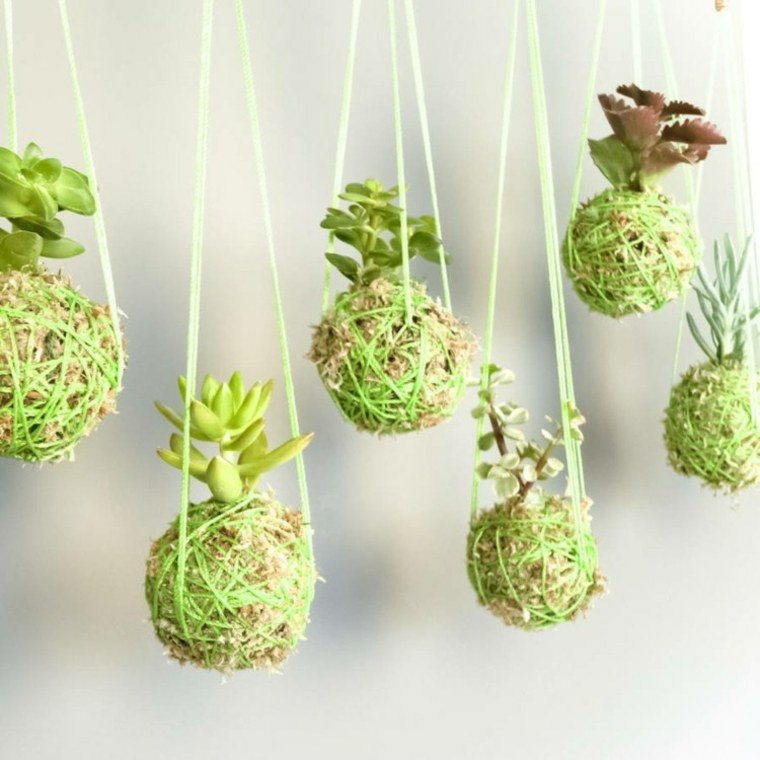 originales bolas colgantes plantas