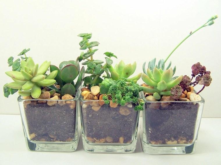 originales macetas vasos vidrio