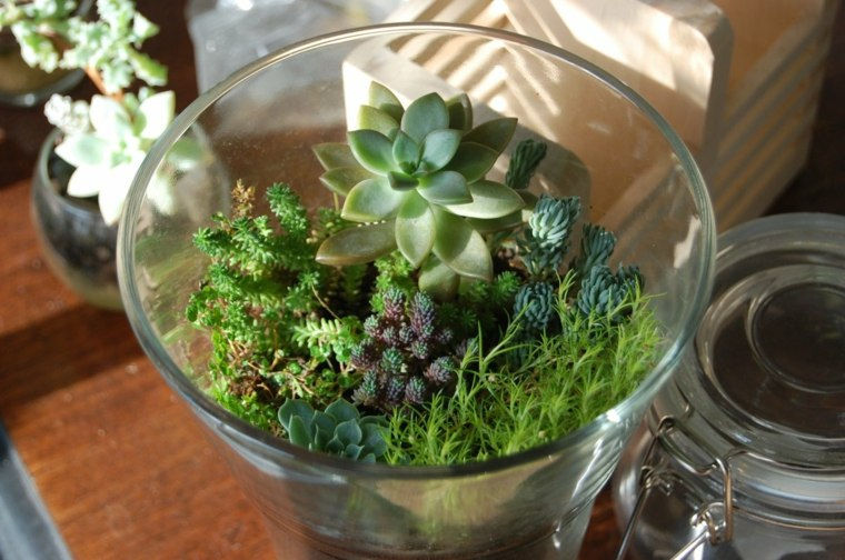 orignales ideas recipientes plantas
