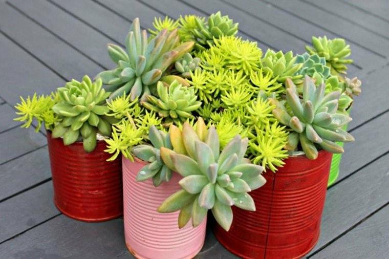 plantas suculentas latas colores