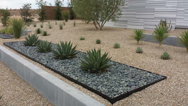 moderno bajo mantenimiento cactus plantas ideas
