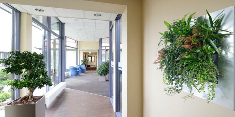 pasillos casa moderna bonsai especiales macetas