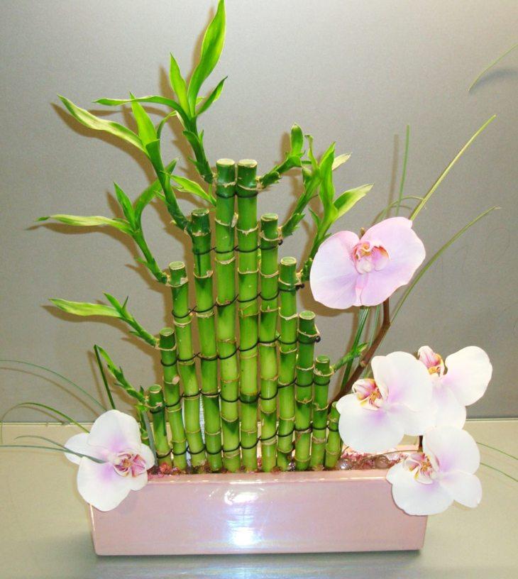 plantas de interio babmbu opciones arreglos ideas