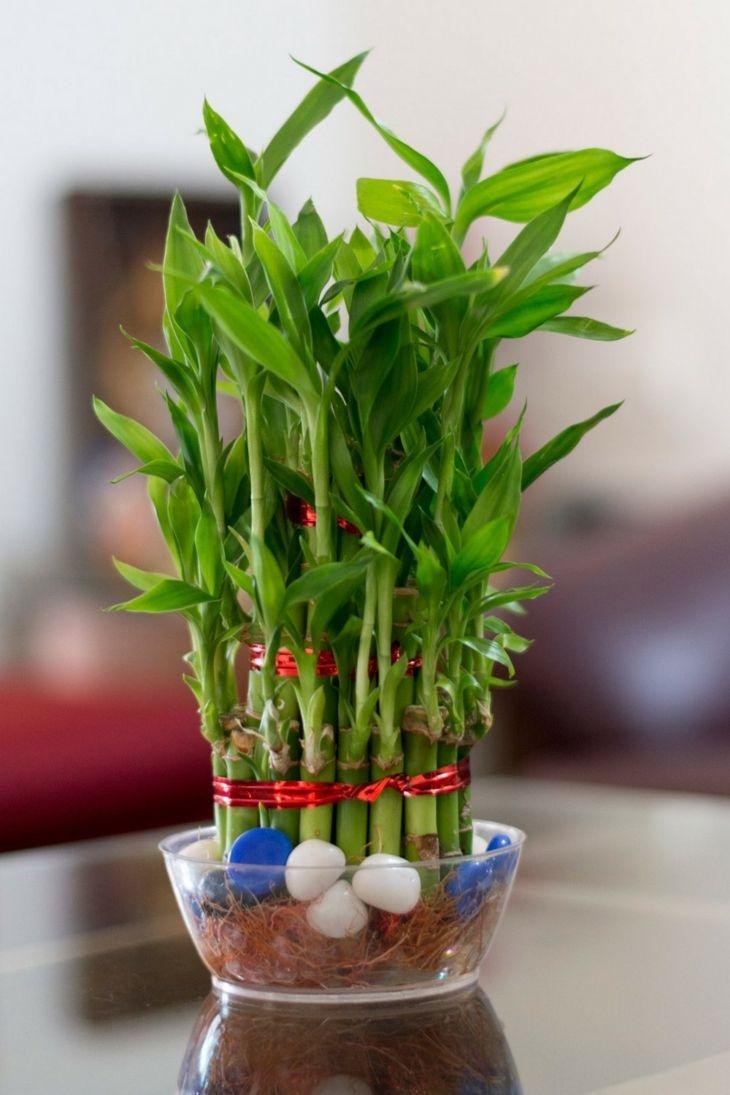 plantas-de-interio-babmbu-opciones-decoracion
