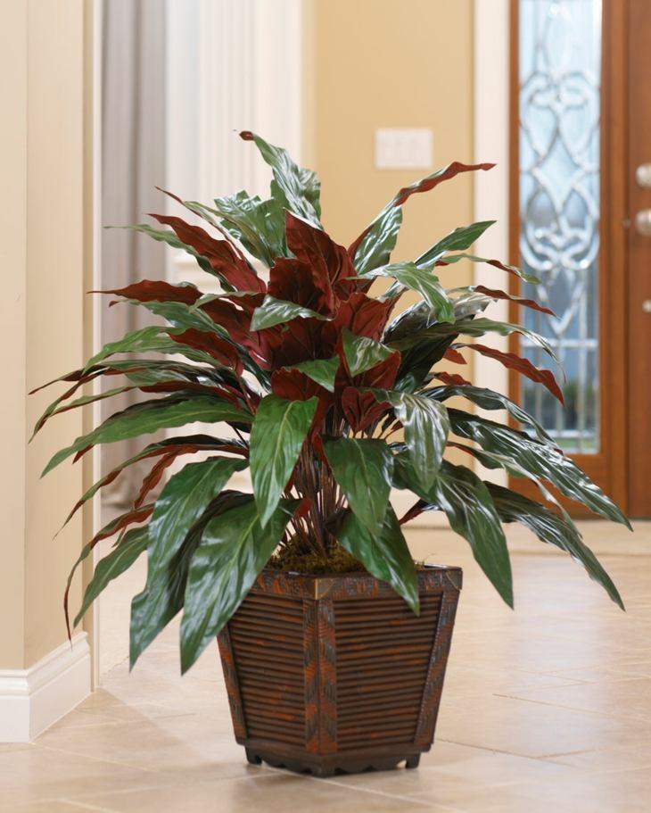 plantas de interior aspidistra opciones casa plantas ideas
