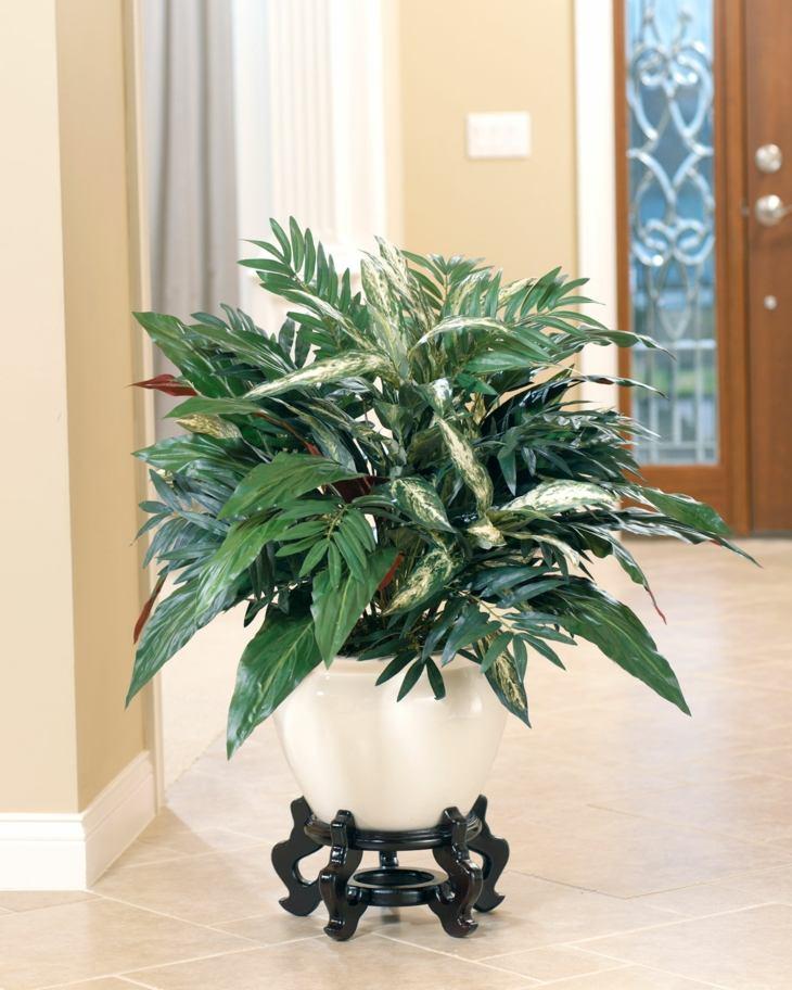 plantas de interior aspidistra opciones decoracion ideas