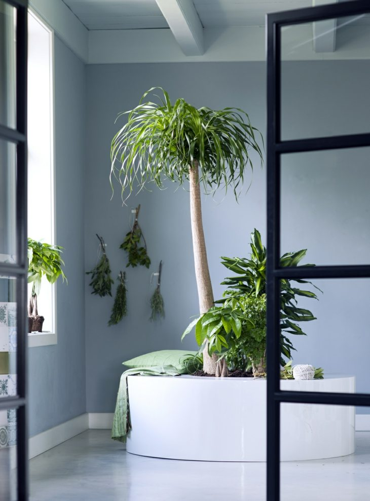 plantas-de-interior-pata-elefante-opciones