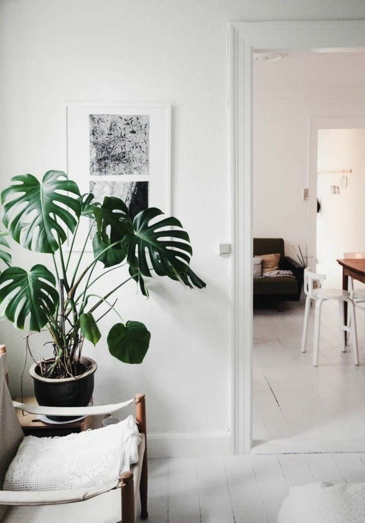 plantas de interior philodendron espacio blanco ideas