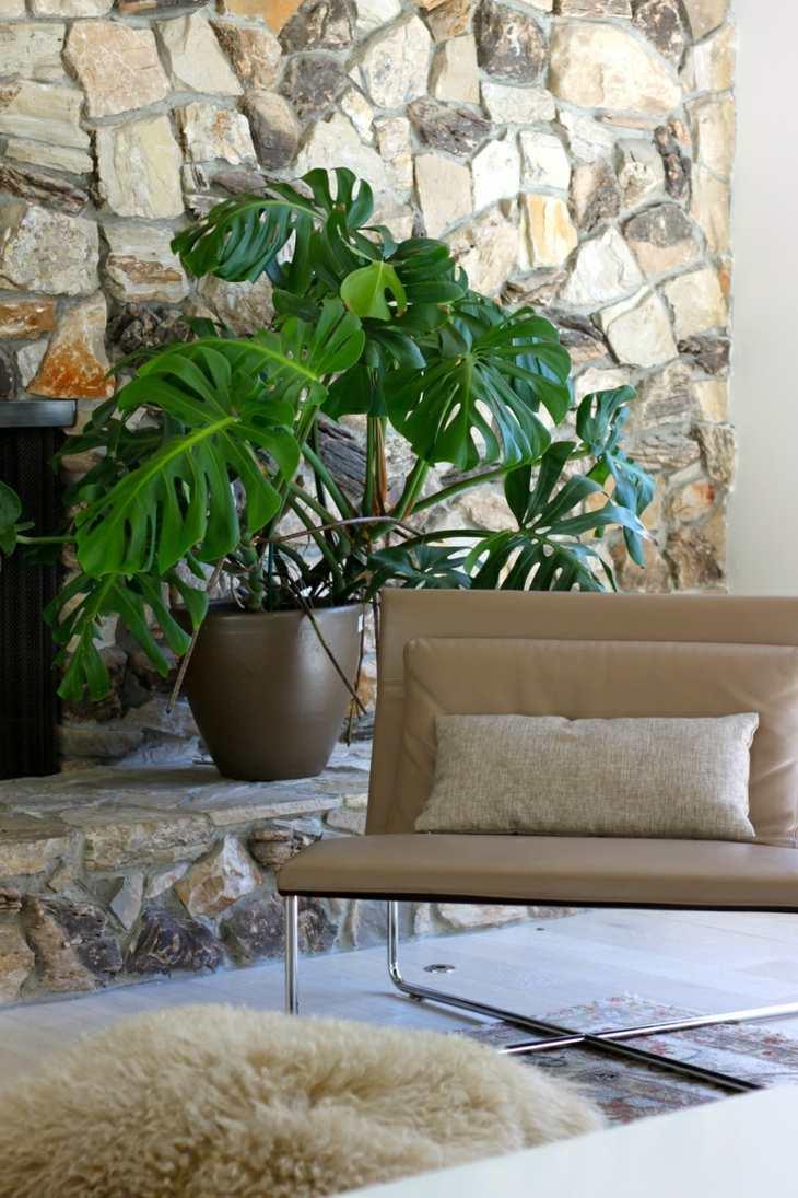 plantas de interior philodendron opciones originales ideas