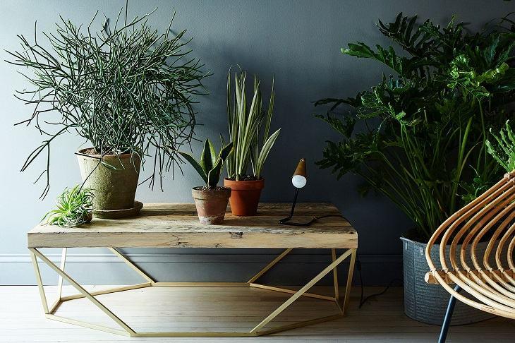 plantas-interior-diseno-espacios-modernos