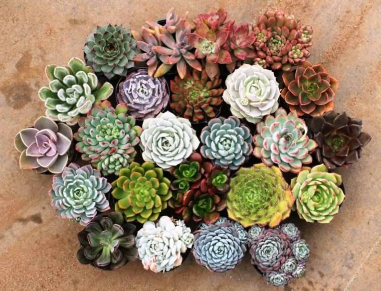 cactus bonitos decorar