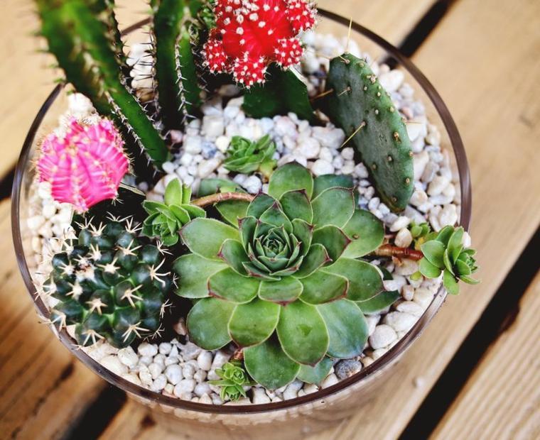 cactus decoracion casa