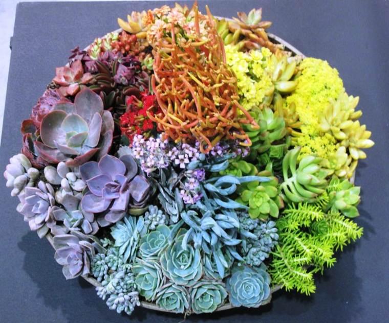 cactus decorativos interior casa